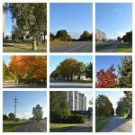 BeFunky-collage (2).jpg -
